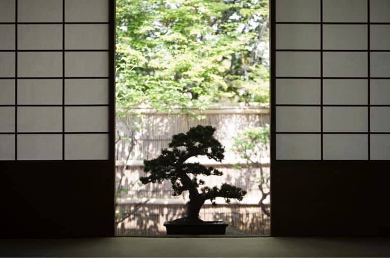 Are Bonsai Indoor or Outdoor Plants?