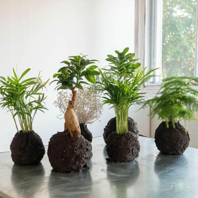 can i use potting soil for kokedama