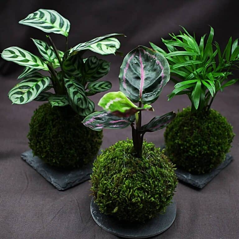 Forget Traditional Pots & Plant Your Houseplants In Japanese Kokedama Instead
