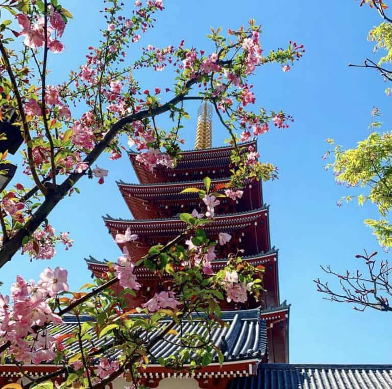 Are Cherry Blossoms Edible?